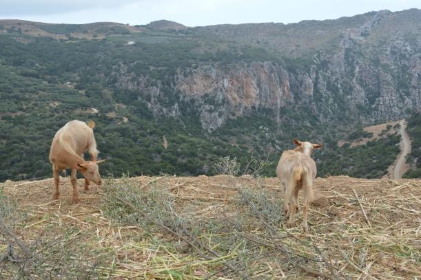Kreta2014-154